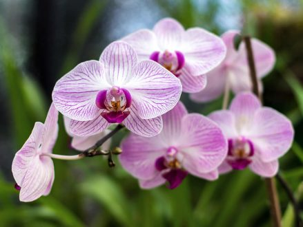 Peptones are commonly used in media to stimulate growth. For example to grow flowers, like this Floricone Phalaenopsis.