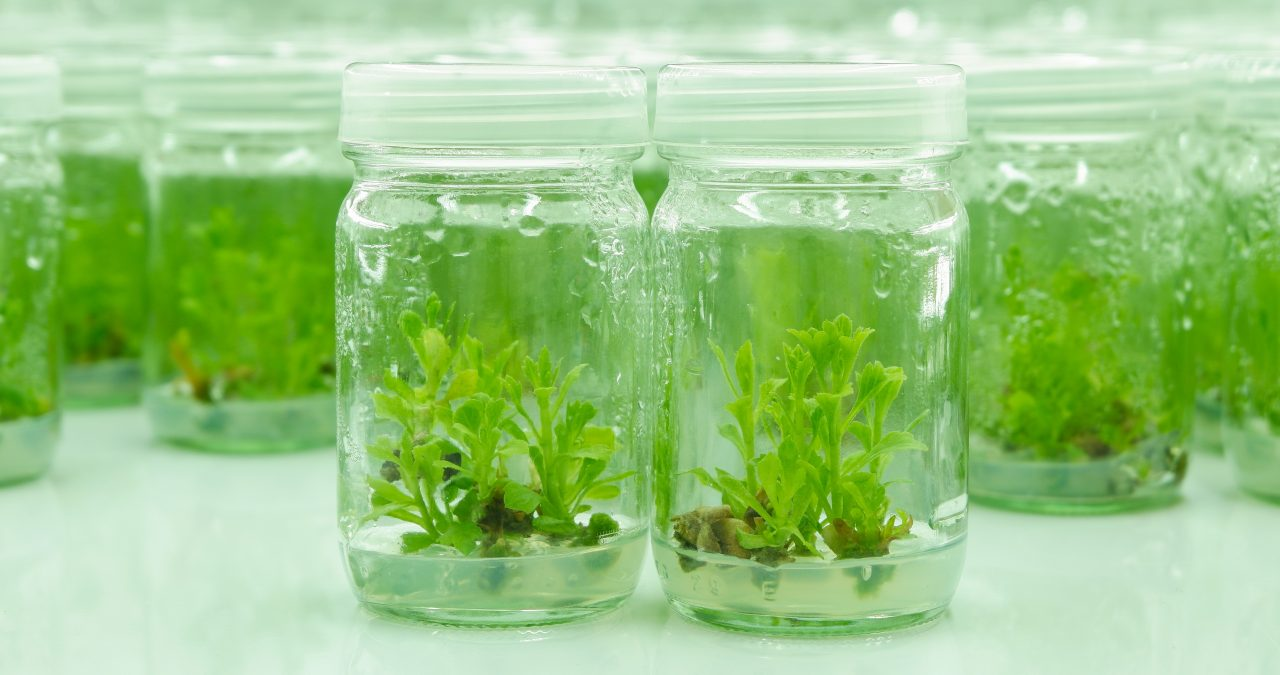 8 components of tissue culture media