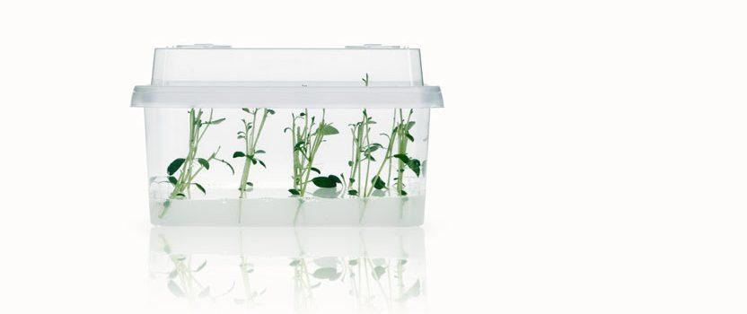 inVenti+ cultivation vessel